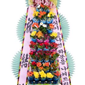 축하포트화환 3호